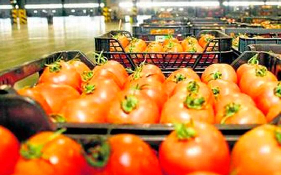 Sigue el enfado por la llegada masiva de frutas y hortalizas de Marruecos: Se dispara un 19% en sandía, tomate, pepino, pimiento,…