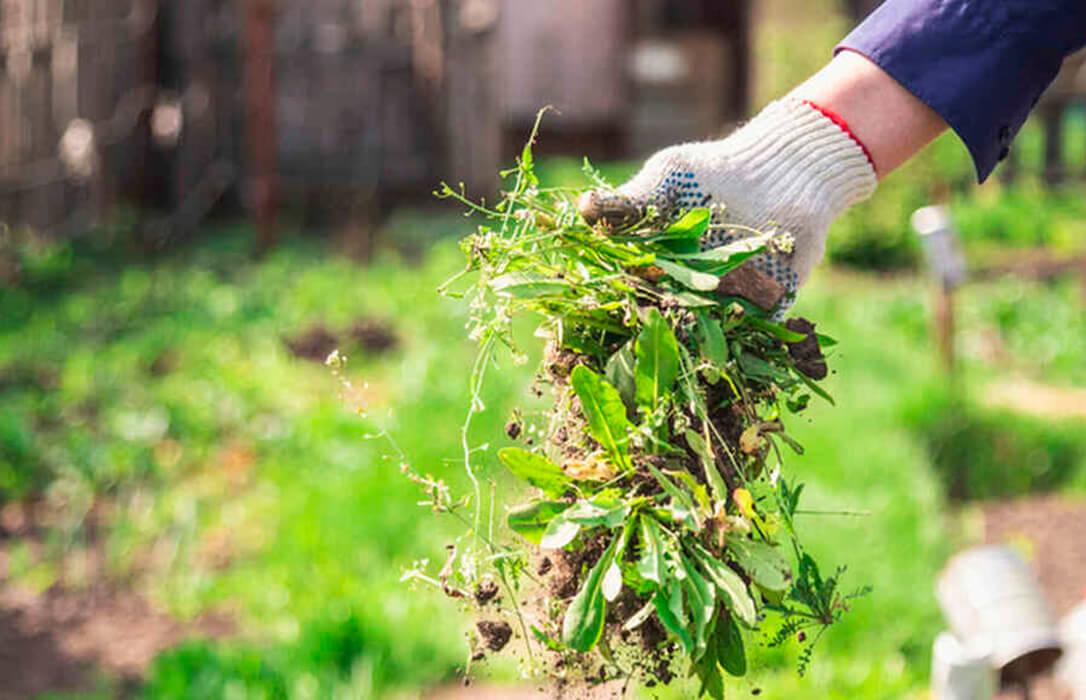 WeLASER: Un tratamiento que suprime por completo los fitosanitarios y toda aplicación química en la eliminación de malas hierbas