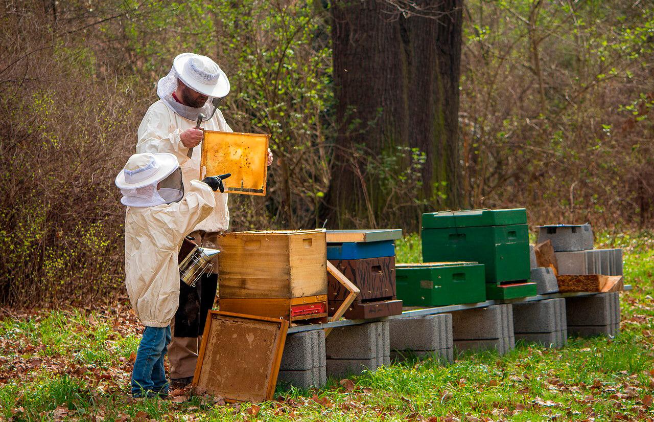 El papel del apicultor profesional y la detección temprana de enfermedades, primordial para el sector a nivel internacional