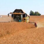Los precios mayoristas de los cereales registran subidas anuales y semanales en el arranque de 2021 1