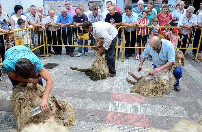 Alternativa no contaminante: Proponen elaborar compost con la lana que sobra todas las campañas de esquileo en Gipuzkoa