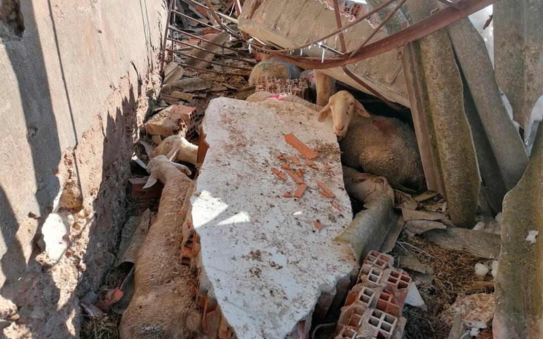 El temporal Filomena no solo pasó por Madrid: Daños en la ganadería, en olivares y en cultivos de media España y ya se teme al hielo