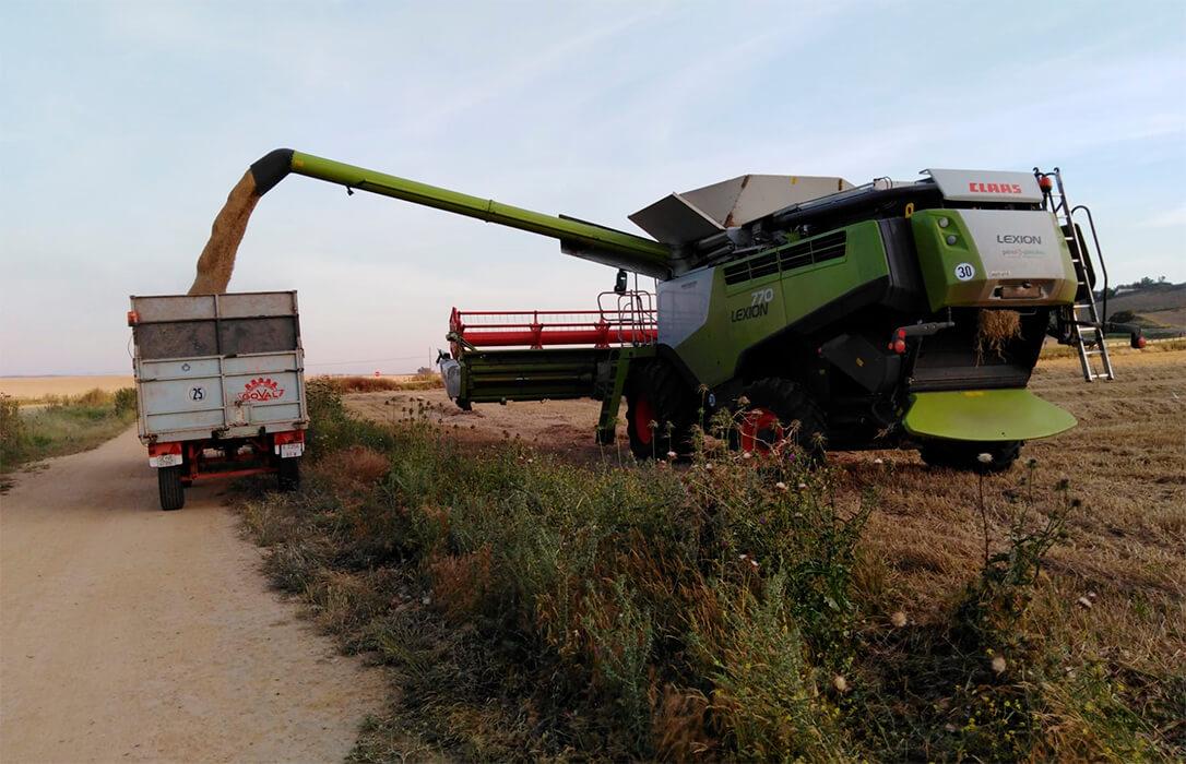 Rectificación a un dato erróneo: La cebada no pierde el 50% de su cotización sino que subió 8 euros la semana pasada