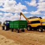 El mercado se ha vuelto loco: La cebada pierde la mitad de su valor en una semana mientras en el resto de cereales disparan las cotizaciones