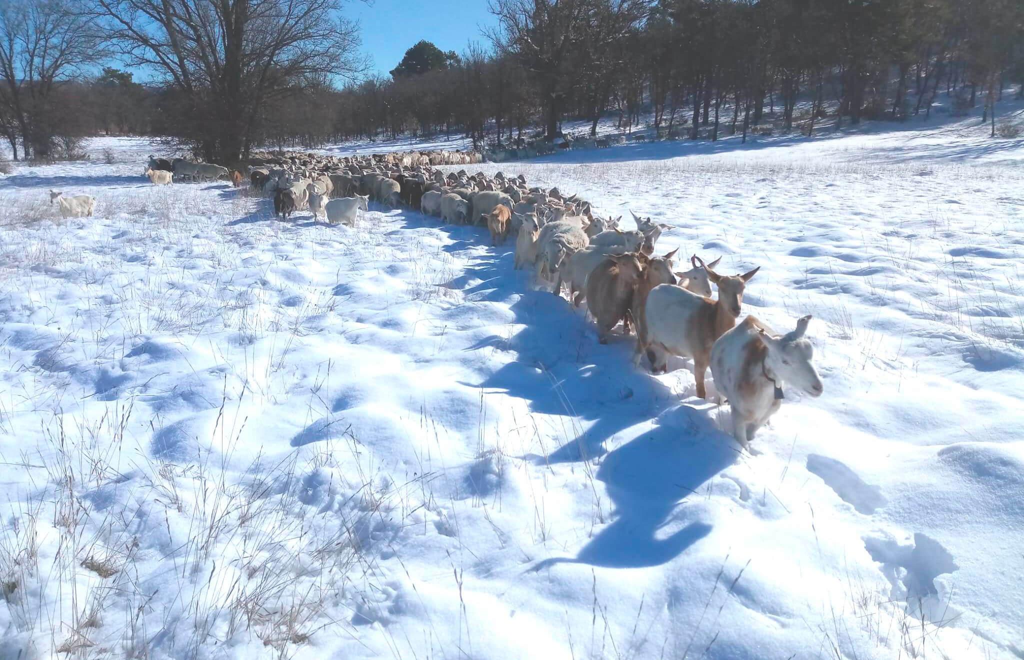 Daños del temporal: Piden un plan para la recuperación del olivar y la ganadería afectados por el temporal