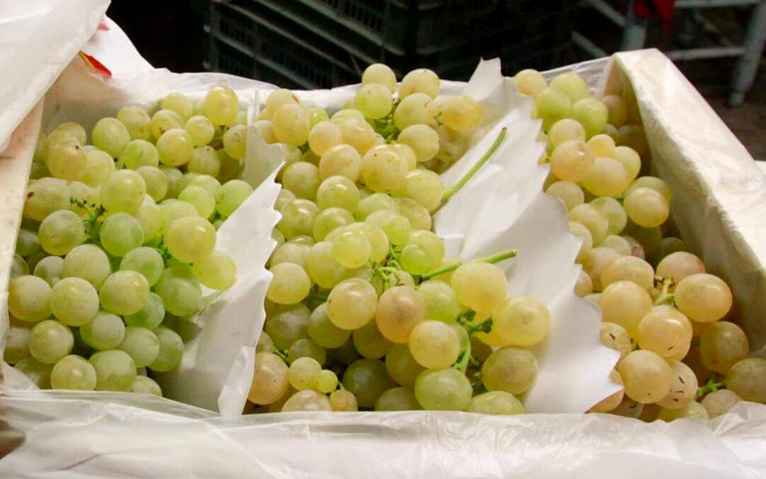 El peor final de año: La distribución utiliza las uvas de fin de año como reclamo y las dejan a un precio por debajo de coste