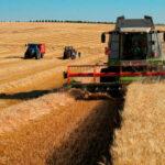Extremadura destina en torno a 200.000 hectáreas a cereal de invierno, una cifra similar a la pasada campaña 1