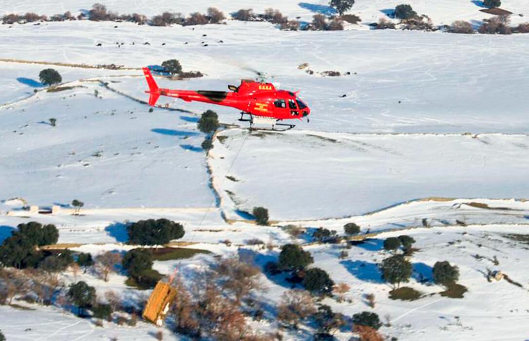 La lucha contra Filomena viene del aire: Ayuda desde un helicóptero para el ganado y para rescatar a personas atrapadas en zonas rurales