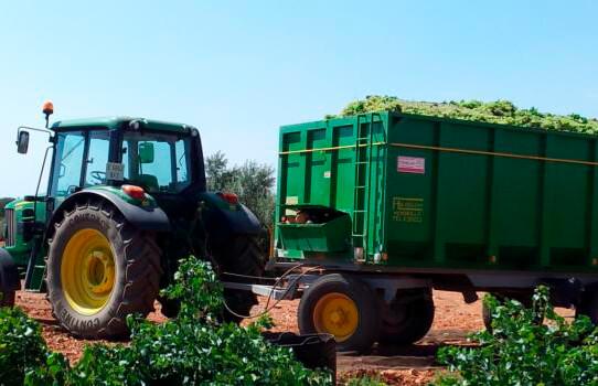 El hundimiento del sector vitivinícola ante la tormenta perfecta: Mucha producción, poca exportación y caída del consumo por el covid