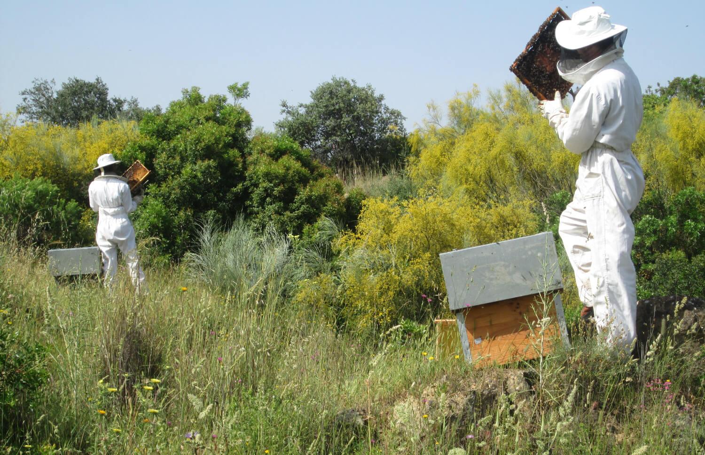 Andalucía consensúa con el sector apícola el incremento presupuestario del 70% del Programa Nacional Apícola