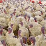 El Gobierno refuerza las medidas bioseguridad para evitar la influenza aviar en España 1