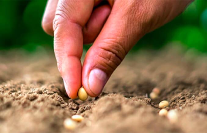 Nueva PAC: La UE incluye la Agricultura de Conservación en el listado de ecoesquemas pero el Ministerio deja fuera la siembra directa