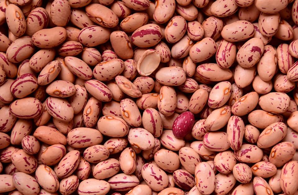 Se mantienen las alzas en todos los cereales y finaliza la campaña de la alubia en León con precios menores de lo esperado