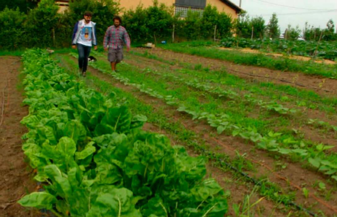 Exigen al gobierno de Asturias el pago de las ayudas pendientes al campo, incluidas la de la PAC o las de modernización