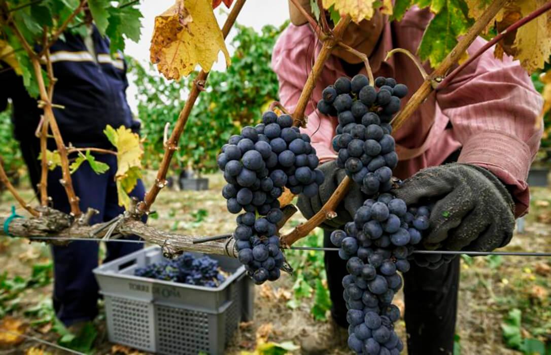 Ley Cadena Alimentaria: «Hay que introducir los costes de producción en la negociación contractual y profundizar en un cambio de mentalidad»
