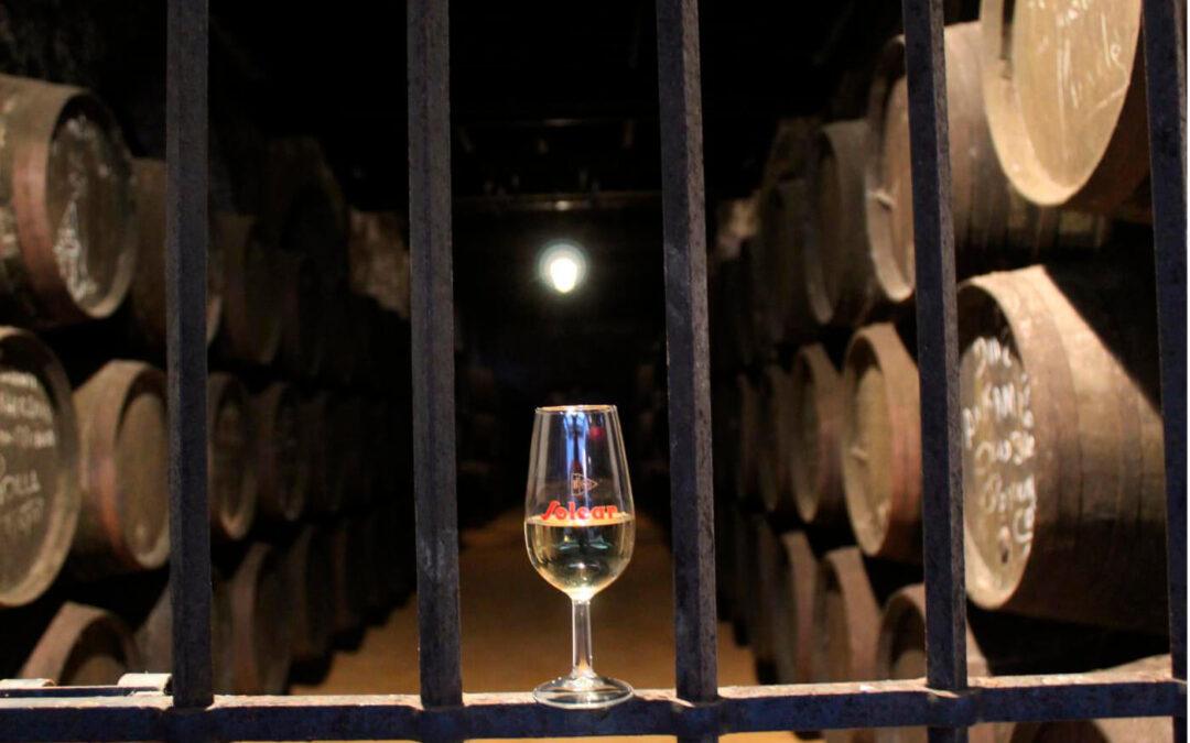 La manzanilla de Sanlúcar se queda sola y no logra el apoyo para tener un Consejo Regulador propio en la DO Vino de Jerez