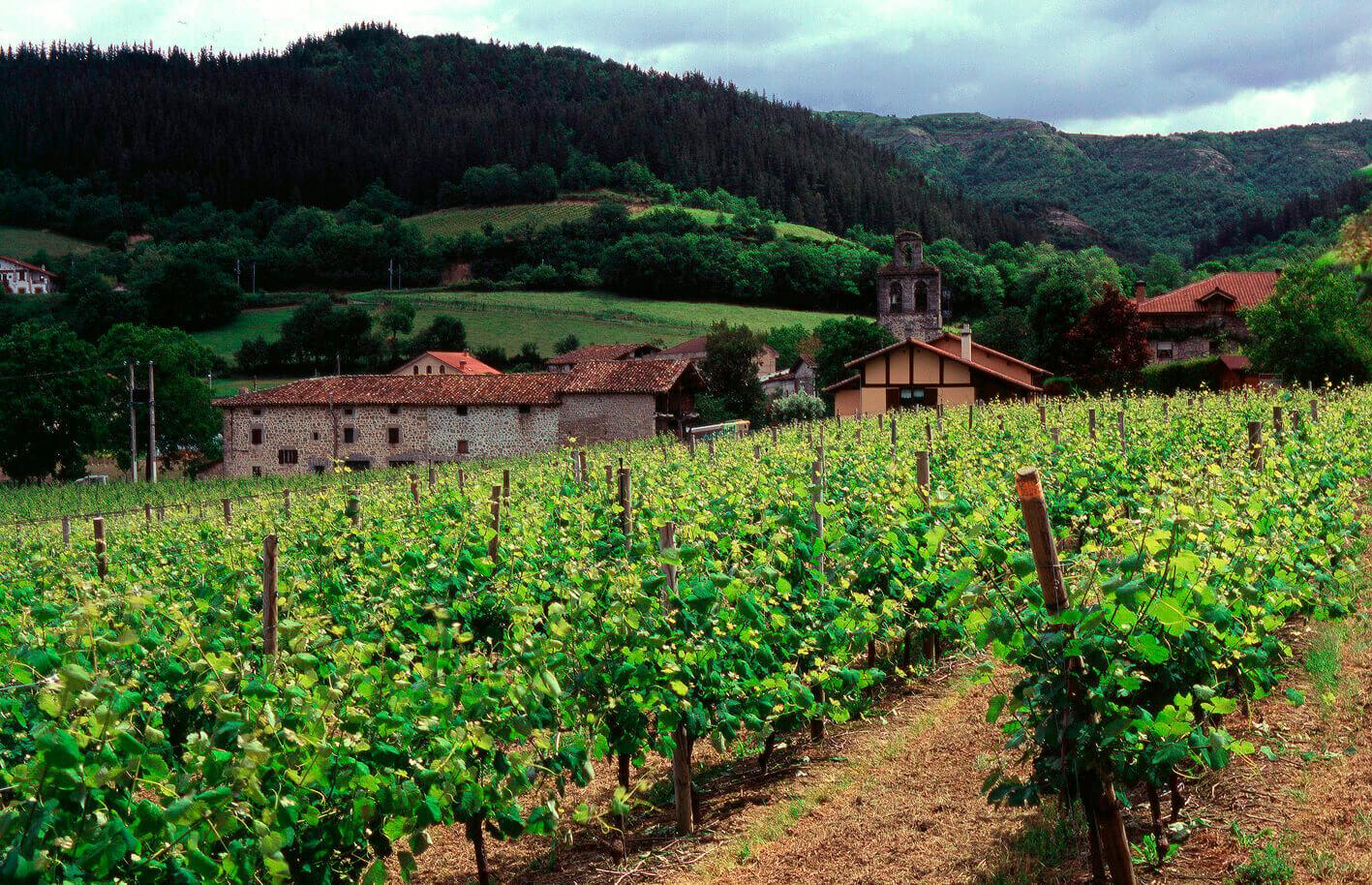 El MAPA informa a las CCAA de las medidas excepcionales al sector del vino en forma de destilación o de ayudas al almacenamiento privado