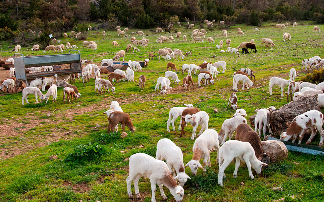Cambios en la PAC: Europa primará más en los ecoesquemas las prácticas para mejorar el bienestar animal que el mantenimiento de la ganadería