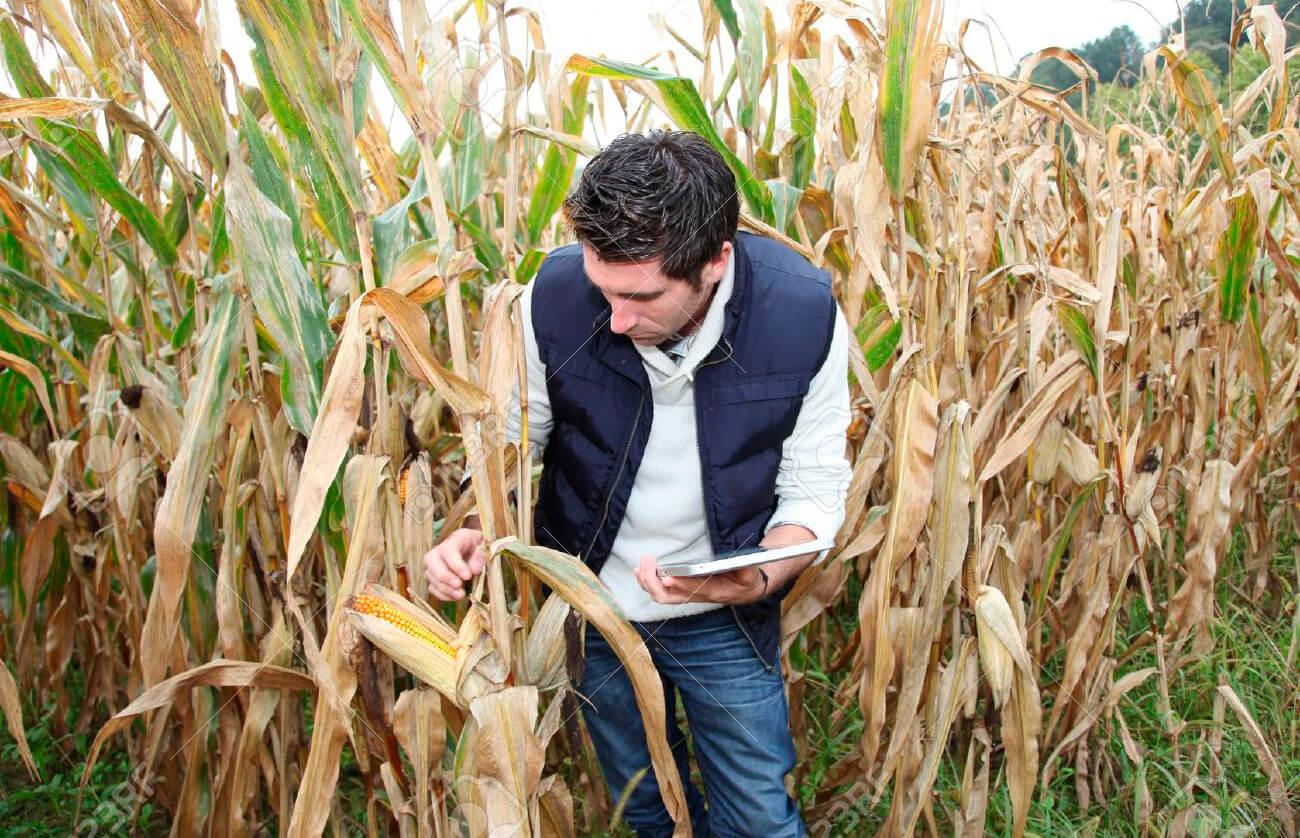 Plan de recuperacion y resiliencia ¿Recuperamos el medio rural?