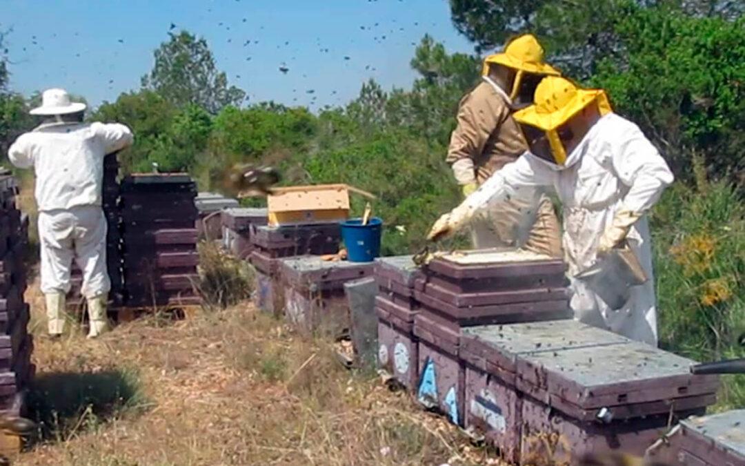 El sector apícola de la Comunitat presenta al Consell un Plan de Viabilidad para evitar la desaparición del sector