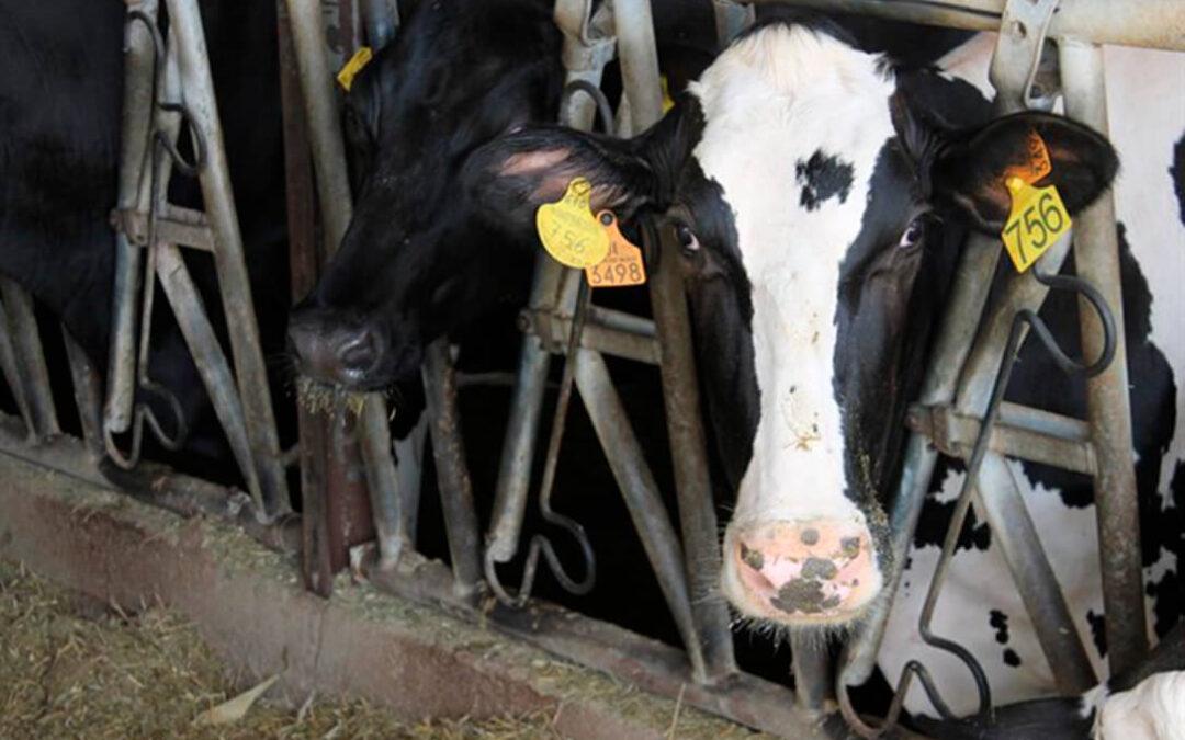 Planas insiste en hacer «contratos por escrito» que aporten «transparencia y previsibilidad a los ganaderos lácteos»