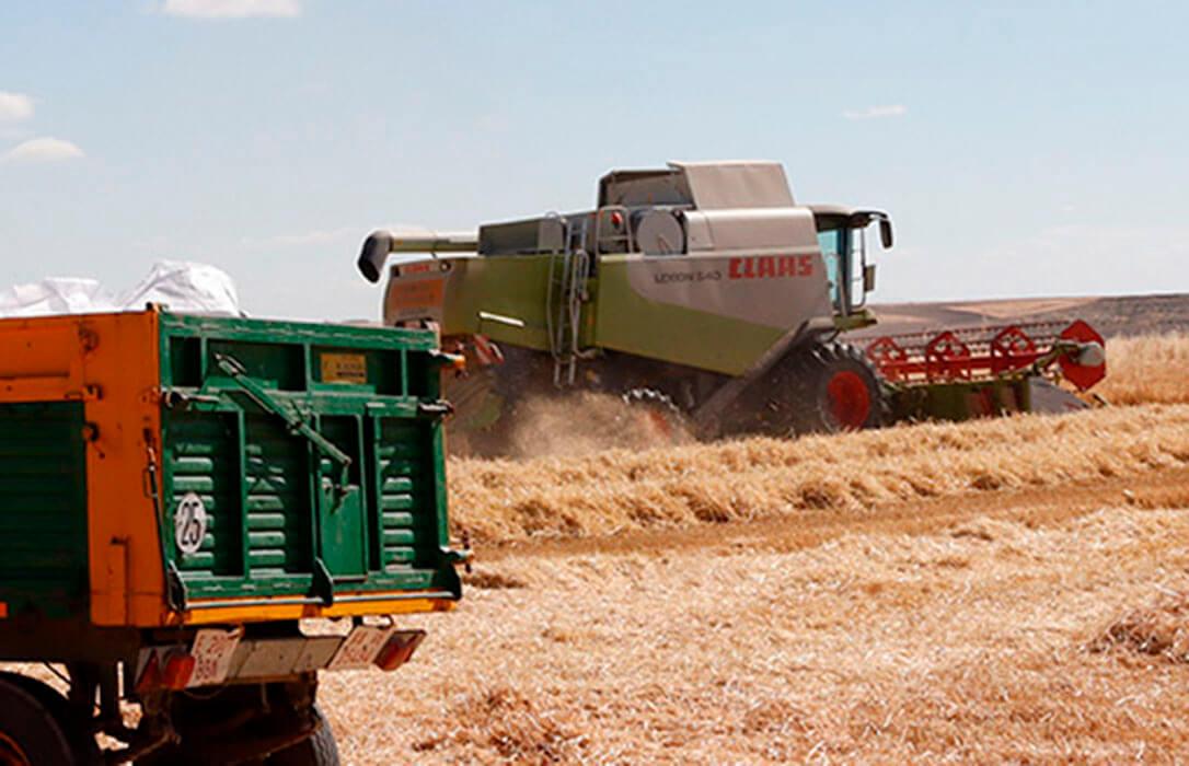 Los precios de los cereales en los mercados mayoristas siguen disparados con subidas de 10€ en el maíz o 13 en el trigo duro