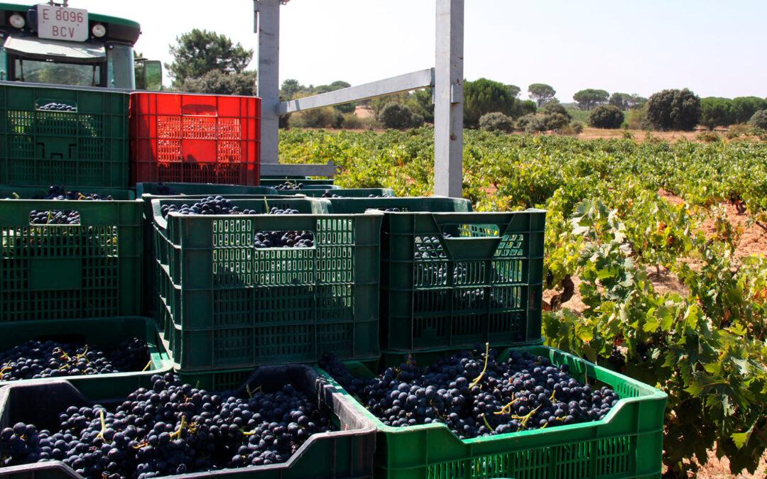 Batería de propuestas para salvar la rentabilidad de los viticultores, que pasan por un presupuesto extraordinario del Ministerio