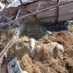Filomena: El Gobierno declara zona catastrófica en 8 CCAA, pero las ayudas para el campo son de 9.000 euros máximo por daños