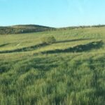 Agricultura de Conservación desde la experiencia: Seminario online de AGRACON 1