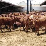 La Junta moviliza 139 millones para respaldar a la ganadería extensiva, «que es Marca Andalucía, medio rural y ecosistema natural» 1