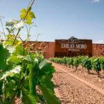 Bodegas Emilio Moro, única empresa agroalimentaria finalista del Premio Nacional Pyme del Año 2020 1