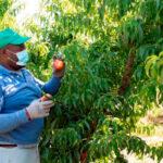 El sector agroalimentario español ha tenido un buen comportamiento durante la pandemia 1