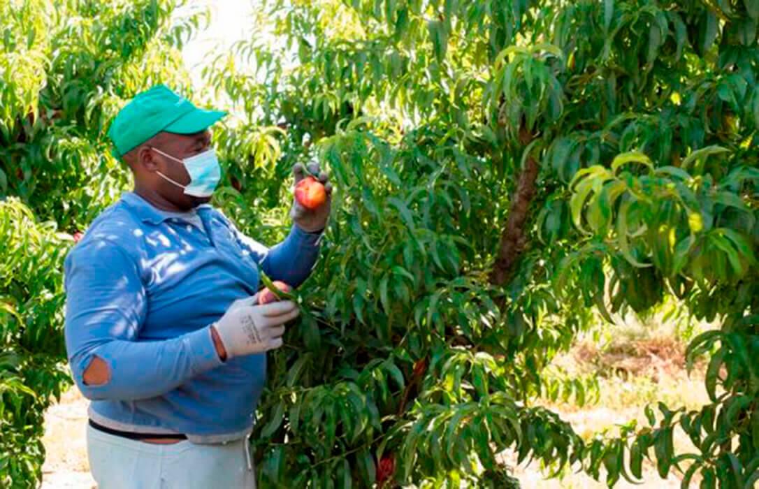 El sector agroalimentario español ha tenido un buen comportamiento durante la pandemia