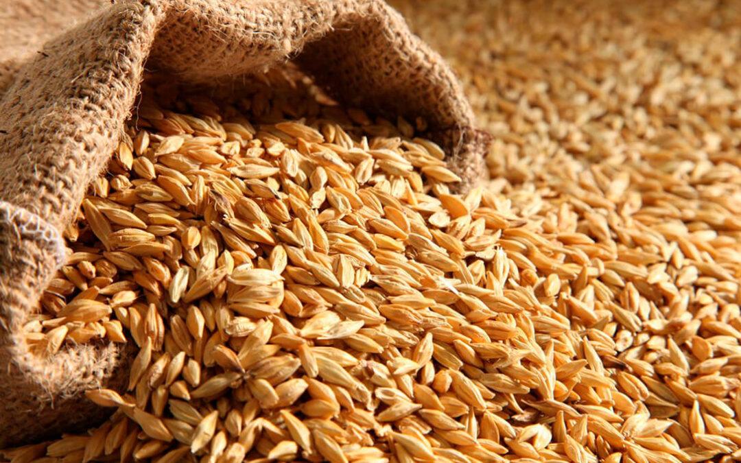 Solo el maíz sube en la lonja de León mientras baja la cebada y repiten el resto de cereales al no haber una tendencia clara