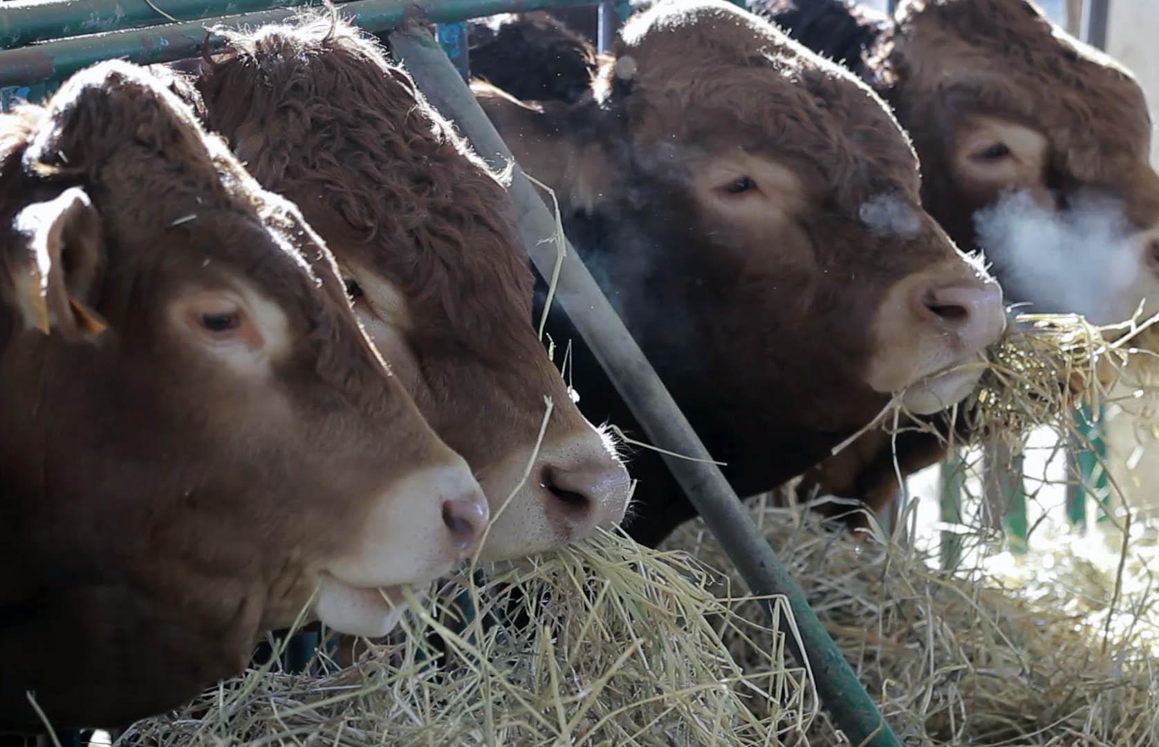 Vayavaca acuerda con GAM la compraventa de maquinaria en su plataforma de igual manera que se viene realizando con el ganado