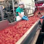 """Denuncian el """"inmovilismo"""" de Conesa tras negarse a subir los precios a los productores de tomate castigan aún más al sector 1"""