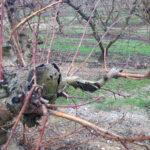 """Reclaman la declaración de """"emergencia cinegética"""" para las zonas afectadas por la masiva presencia de conejos 1"""