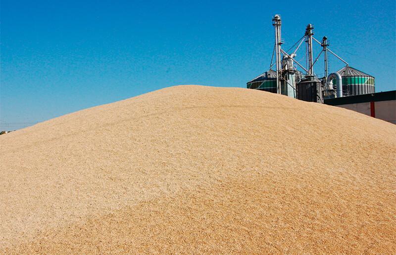 Frenazo en seco en los precios de los cereales que ve cómo el trigo duro pierde 10 euros y que solo el maíz logran una leve subida