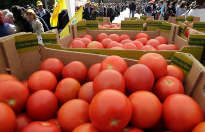 Denuncian a la industria tomatera ante la AICA por incumplir el precio mínimo y excederse en los 30 días el pago