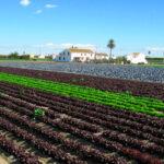 Proponen mecanismos legales que den cobertura al intercambio de semillas y material vegetal entre agricultores en el sector ecológico 1
