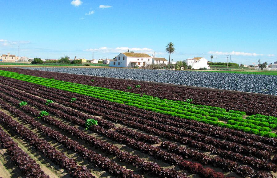 Proponen mecanismos legales que den cobertura al intercambio de semillas y material vegetal entre agricultores en el sector ecológico