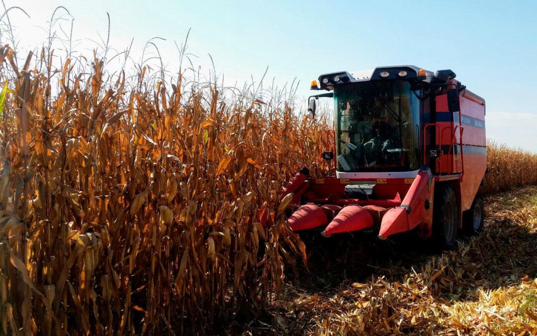 Un estudio revela que la alta rentabilidad hace de maíz y soja unos de los cultivos más viables en Aragón