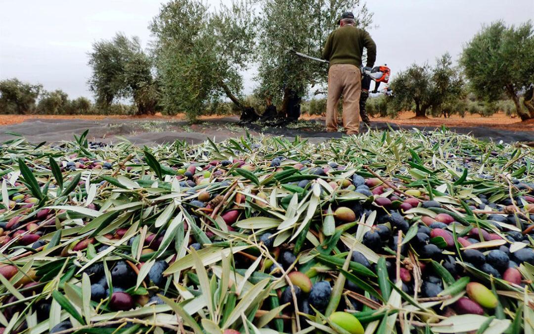 La llegada de Biden no trae cambios en los aranceles, que se mantienen en el 25% para los productos españoles como el aceite o la aceituna