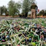 La llegada de Biden no trae cambios en los aranceles, que se mantienen en el 25% para los productos españoles como el aceite o la aceituna 1