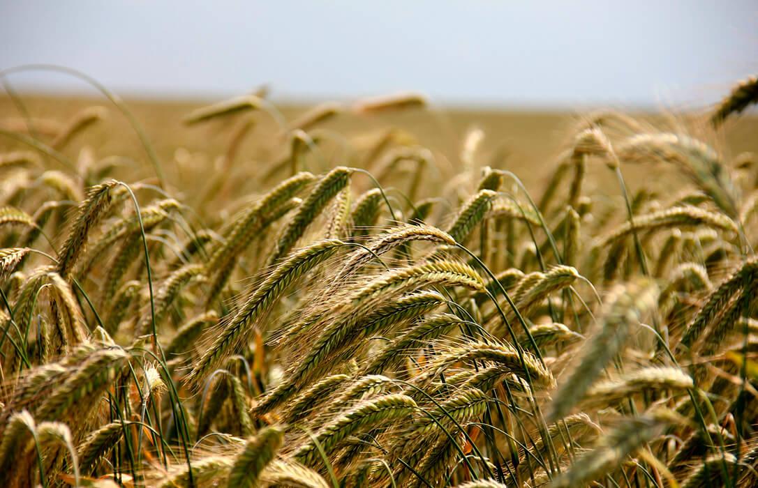 Sesión anodina pero rentable en la Lonja de León  con subidas en todos los cereales