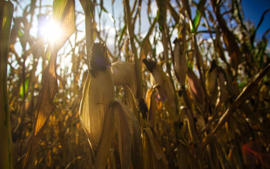 Proyecto MORERA, un nuevo sistema de recomendación agrícola que reducirá hasta un 25% el empleo del agua en los cultivos