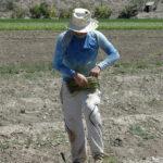 La brecha salarial en la mujer rural: Seis de cada diez mujeres que ayudan en el campo no cotizan por su actividad económica 1