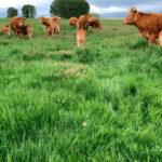 Convergencia de la PAC en el sector ganadero: Poner en valor los pastos y una ayuda de Pago Básico a la extensiva y solo asociadas al intensivo 1