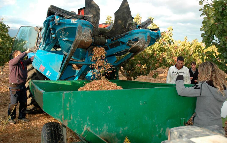 Castilla y León sigue apostando por el pistacho y desarrolla nuevas técnicas de precisión en su cultivo y de productos innovadores