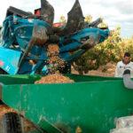 Castilla y León sigue apostando por el pistacho y desarrolla nuevas técnicas de precisión en su cultivo y de productos innovadores 1